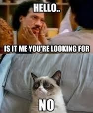 caturday meme with grumpy cat telling Lionel RIchie he is not looking for him