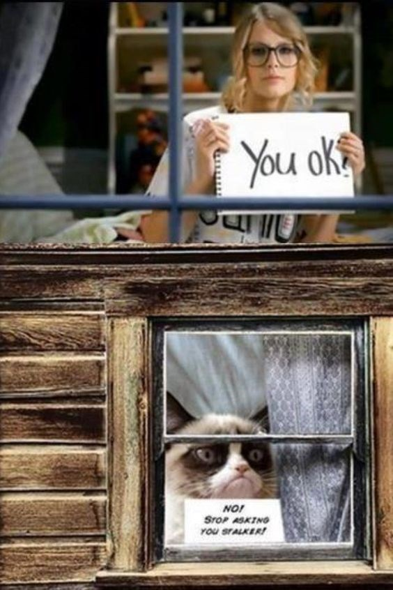 """caturday meme with grumpy cat telling Tayoe Swift to stop asking if he's ok from """"you belong with me"""""""