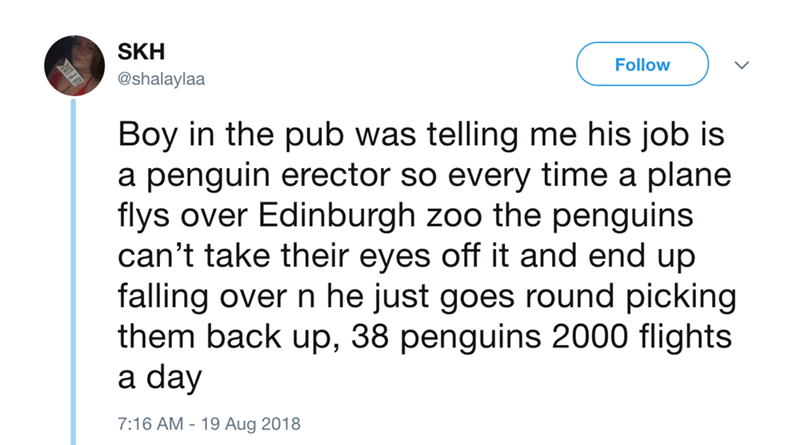 Text - SKH Follow @shalaylaa Boy in the pub was telling me his job is a penguin erector so every time a plane flys over Edinburgh zoo the penguins can't take their eyes off it and end up falling over n he just goes round picking them back up, 38 penguins 2000 flights a day 7:16 AM - 19 Aug 2018