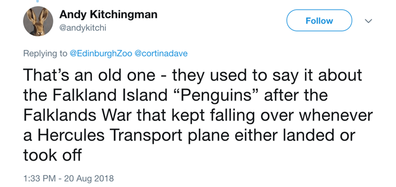 "Text - Andy Kitchingman Follow @andykitchi Replying to @EdinburghZoo @cortinadave That's an old one - they used to say it about the Falkland Island ""Penguins"" after the Falklands War that kept falling over whenever a Hercules Transport plane either landed or took off 1:33 PM 20 Aug 2018"