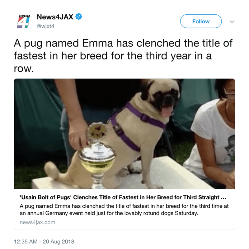 Pug - News4JAX WJXT Follow @wjxt4 A pug named Emma has clenched the title of fastest in her breed for the third year in a row. 'Usain Bolt of Pugs' Clenches Title of Fastest in Her Breed for Third Straight ... A pug named Emma has clenched the title of fastest in her breed for the third time at an annual Germany event held just for the lovably rotund dogs Saturday. news4jax.com 12:35 AM -20 Aug 2018