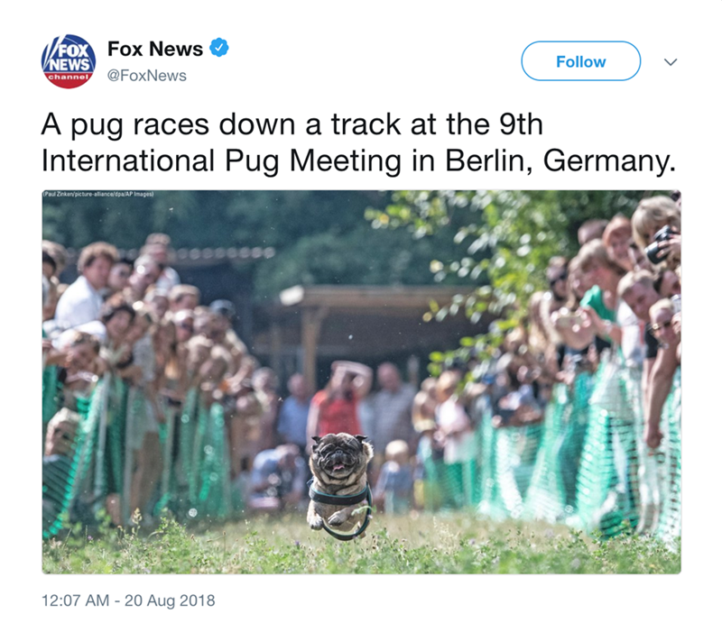 People - Fox News /FOX NEWS Follow @FoxNews channel, A pug races down a track at the 9th International Pug Meeting in Berlin, Germany. Paul Zinken/picture-alliance/dpa/AP Images) ecsssese 12:07 AM - 20 Aug 2018