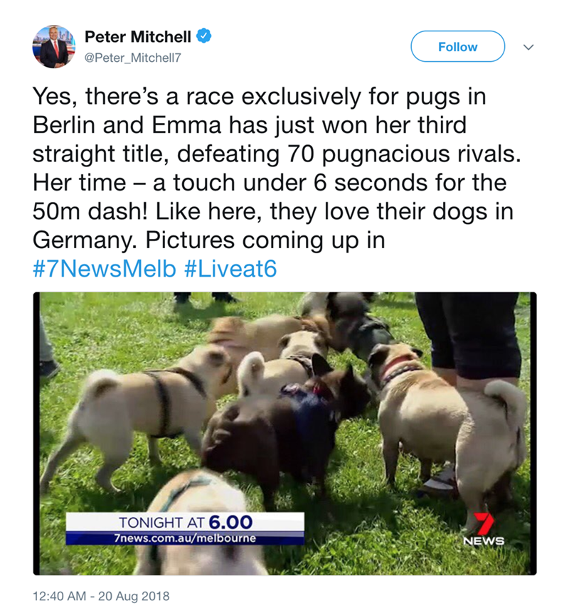 Adaptation - Peter Mitchell Follow @Peter_Mitchell7 Yes, there's a race exclusively for pugs in Berlin and Emma has just won her third straight title, defeating 70 pugnacious rivals. Her time a touch under 6 seconds for the - 50m dash! Like here, they love their dogs in Germany. Pictures coming up in #7NewsMelb #Liveat6 TONIGHT AT 6.00 7news.com.au/melbourne NEWS 12:40 AM 20 Aug 2018