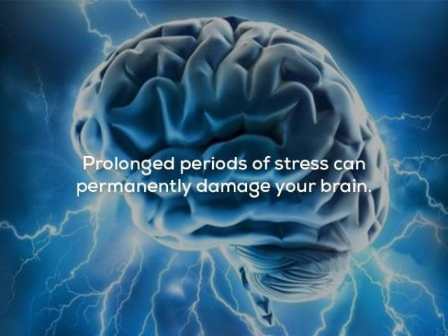 Brain - Prolonged periods of stress can permanently damage your brain