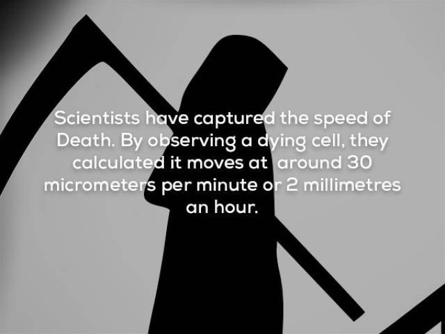 Text - Scientists have captured the speed of Death. By observing a dying cell, they calculated it moves at around 30 micrometers per minute or 2 millimetres an hour.