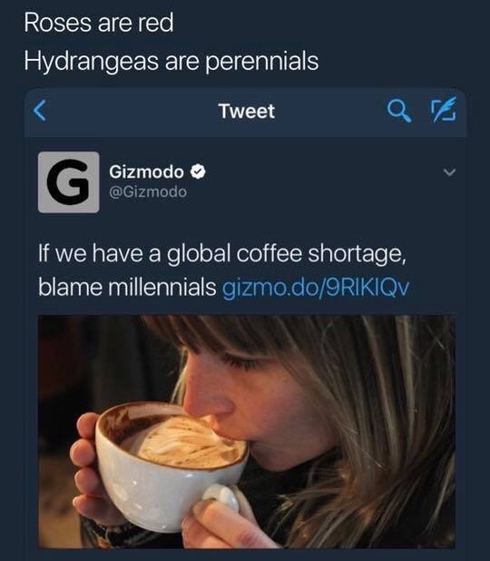 "Tweet that reads, ""Roses are red, Hydrangeas are perennials, if we have a global coffee shortage, blame Millennials"""