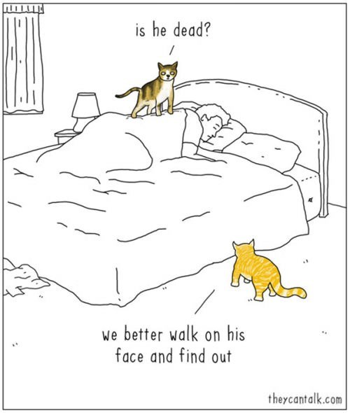Illustration of cats discussing stepping on sleeping owner's face