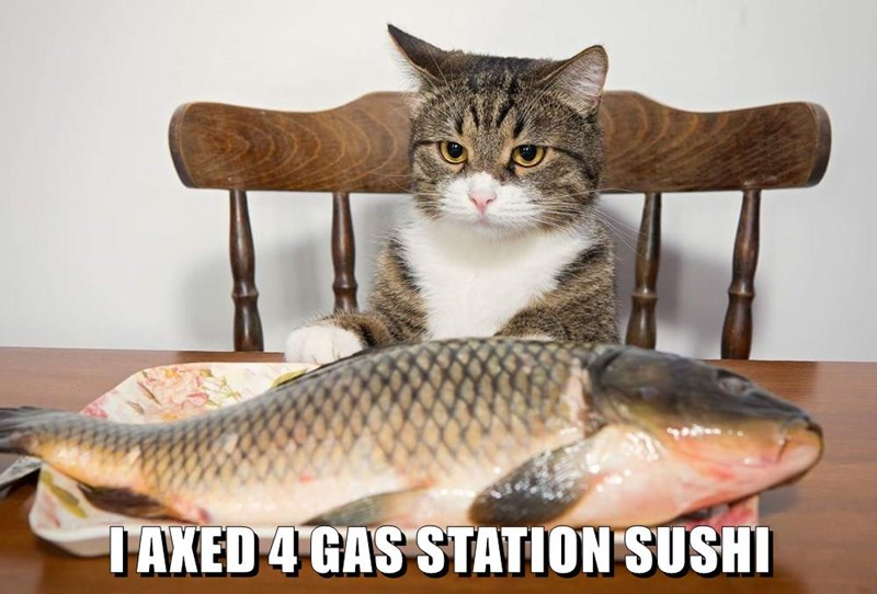 I Axed 4 Gas Station Sushi Lolcats Lol Cat Memes Funny Cats Funny Cat Pictures With Words On Them Funny Pictures Lol Cat Memes Lol Cats Easily move forward or backward to get to the perfect spot. funny pictures lol cat memes lol cats