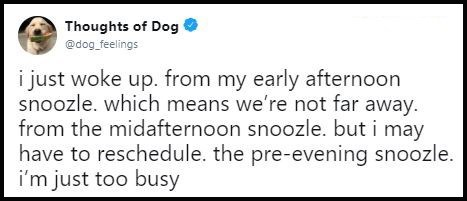 """Tweet that reads, """"I just woke up from my early afternoon snoozle which means we're not far away from the mid-afternoon snoozle but I may have to reschedule the pre-evening snoozle. I'm just too busy"""""""