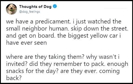 "Tweet that reads, ""We have a predicament. I just watched the small neighbor human skip down the street and get on board the biggest yellow car I have ever seen. Where are they taking them? Why wasn't I invited? Did they remember to pack enough snacks for the day? Are they ever coming back?"""