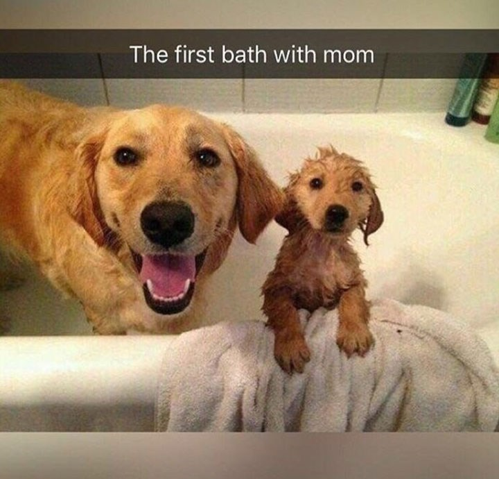 Dog - The first bath with mom