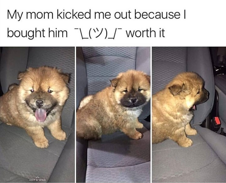 Dog - My mom kicked me out becauseI bought him L9)T worth it EDIT S SEND