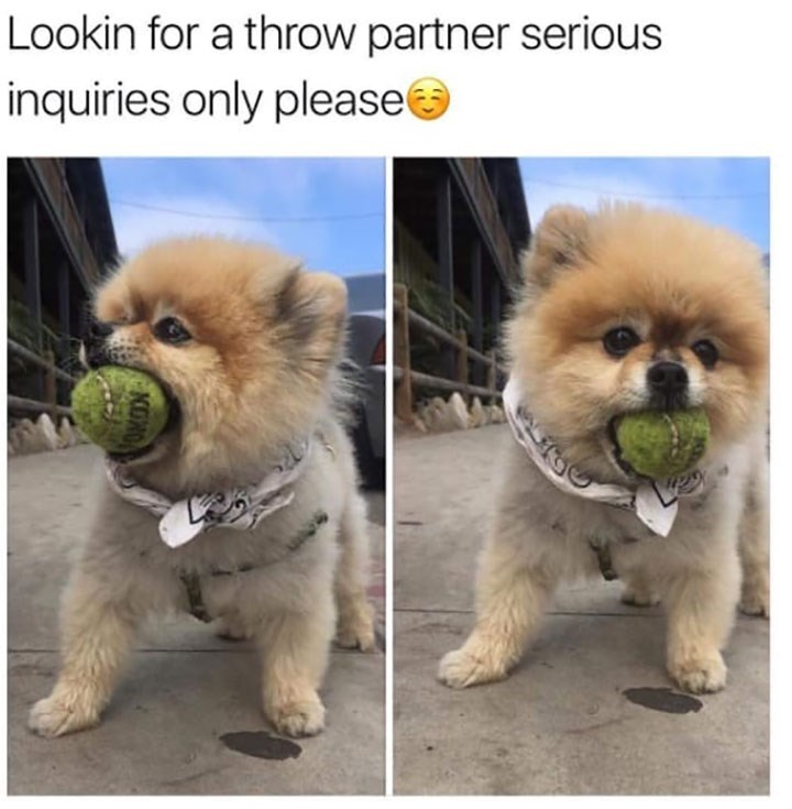 Dog - Lookin for a throw partner serious inquiries only please ONN
