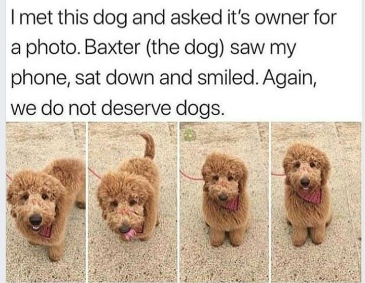 Dog - Imet this dog and asked it's owner for a photo. Baxter (the dog) saw my phone, sat down and smiled. Again, we do not deserve dogs.