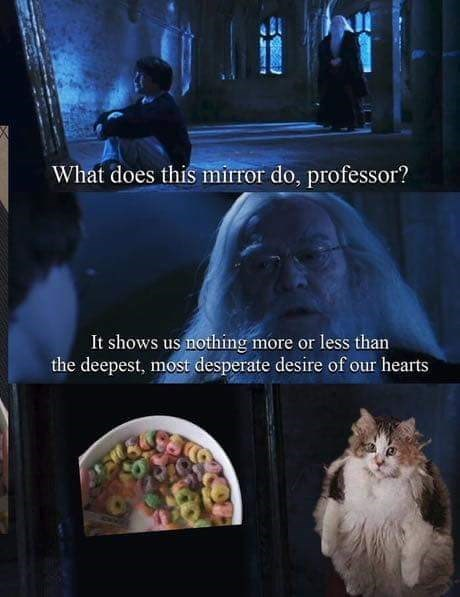 Meme of Harry Potter looking into the Mirror of Erised with Dumbledore; ends up being a cat looking into the mirror and seeing loops
