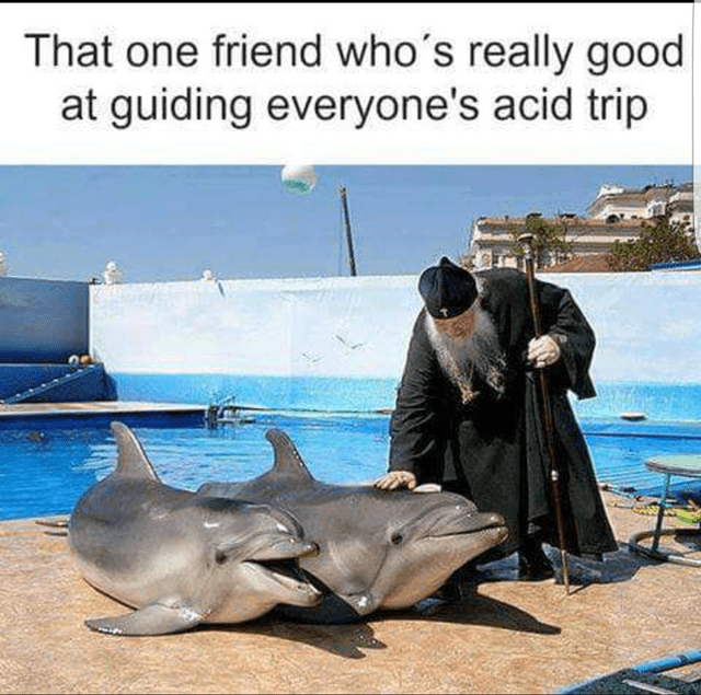 """Pic of an Orthodox Christian priest petting a dolphin under the caption, """"That one friend who's really good at guiding everyone's acid trip"""""""