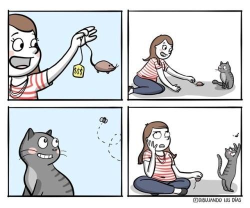 cuando le compras un juguete a tu gato