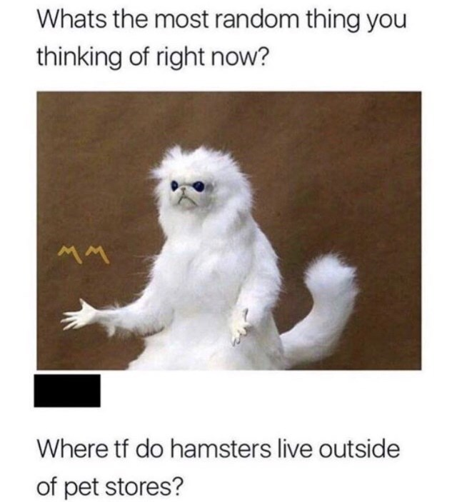 "Picture of a creepy-looking cat with the caption, ""What's the most random thing you thinking of right now? Where TF do hamsters live outside of pet stores?"""