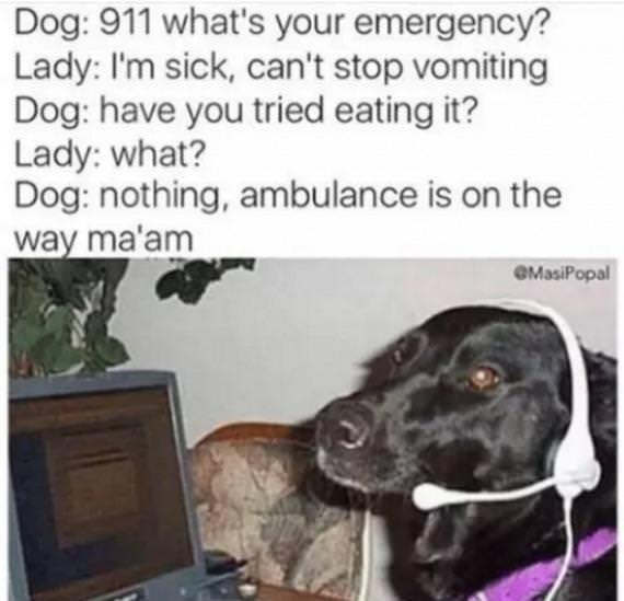 911 dog meme