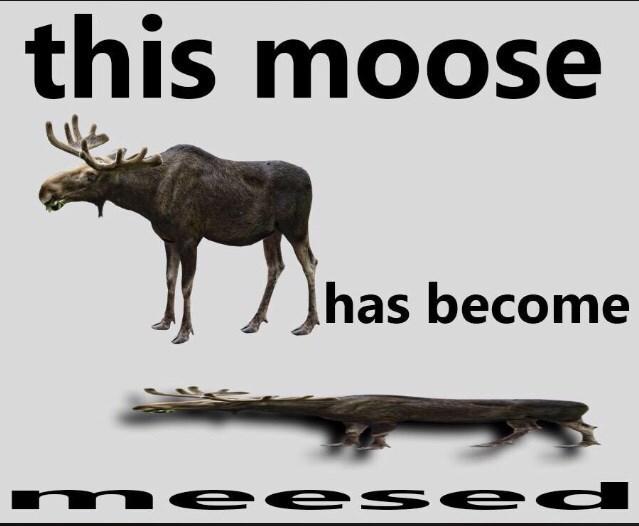 Wildlife - this moose has become n ee se d