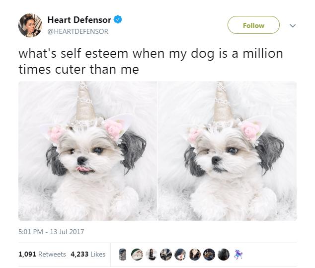 Puppy - Heart Defensor Follow @HEARTDEFENSOR what's self esteem when my dog is a million times cuter than me 5:01 PM 13 Jul 2017 1,091 Retweets 4,233 Likes