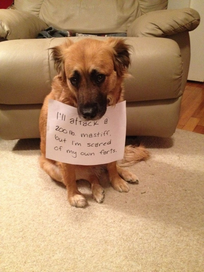 Dog - 200 lb. mastiff, but Im scared of my own farts