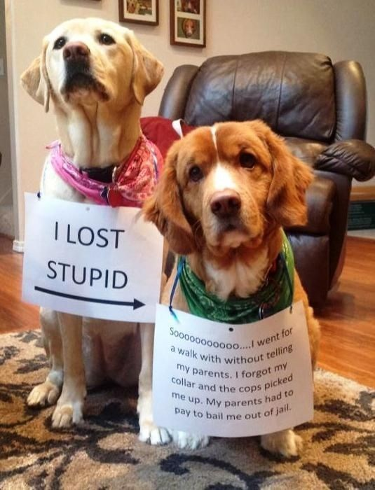Dog - I LOST STUPID Sooo00000000....! went for a walk with without telling my parents. I forgot my collar and the cops picked me up. My parents had to pay to bail me out of jail