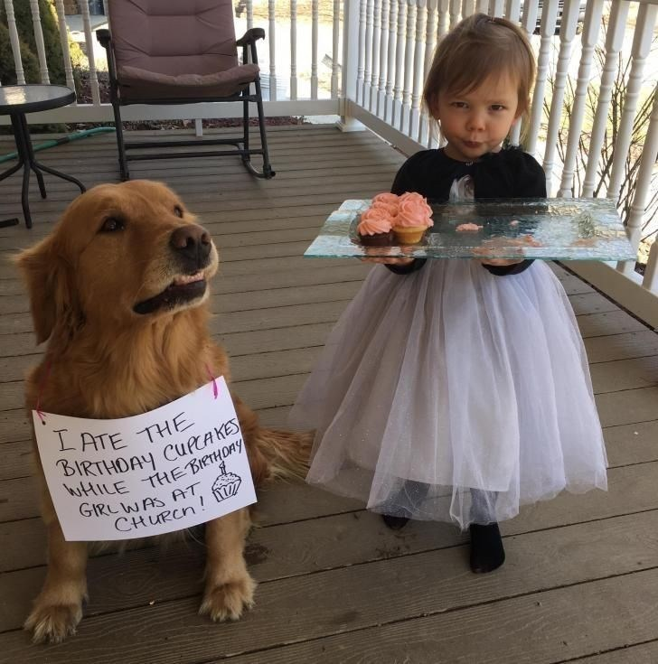Dog - LATE THE BIRTHDAY CURCAKE ttiLE THE BIRTHORY GIRLWAS AT CtURch!