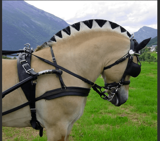 Horse with beautiful hair patterns