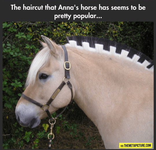 Halter - The haircut that Anna's horse has seems to be pretty popular... VIA THEMETAPICTURE.COM