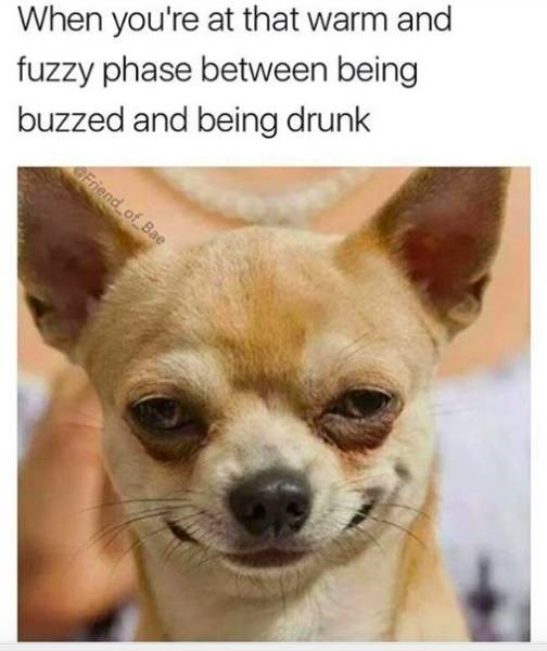 meme about being the right amount of drunk with pic of Chihuahua dog smiling