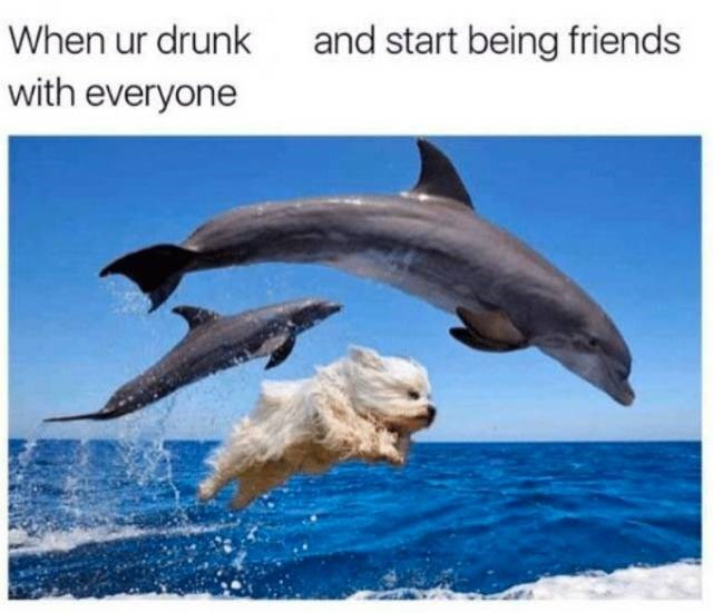 meme about being friendly when drunk with pic of dog jumping in the water with dolphins