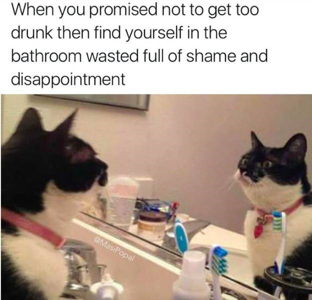 meme about getting drunk despite not planning to with pic of cat staring at itself in the mirror