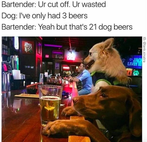 meme about one dog beer being equivalent to seven human beers