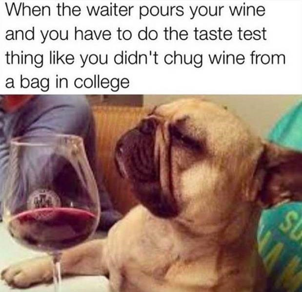 meme about pretending to be a sophisticated drinker with pic of pug dog next to a wine glass