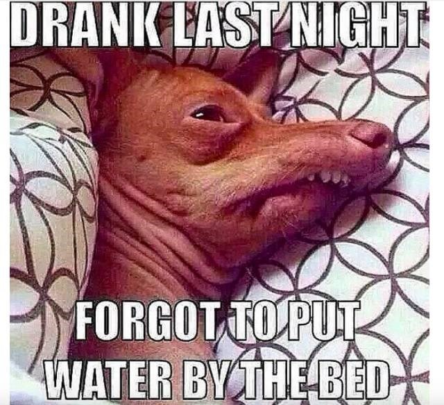 meme about waking up thirsty after a night of drinking with pic of a tired looking dog in bed