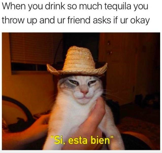 meme about speaking Spanish when drinking tequila with pic of cat in a sombrero