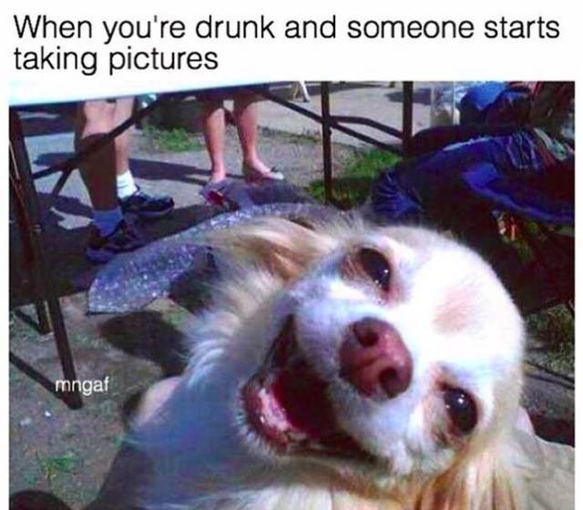 meme about posing for photos when drunk with pic of smiley dog tilting its head to the side
