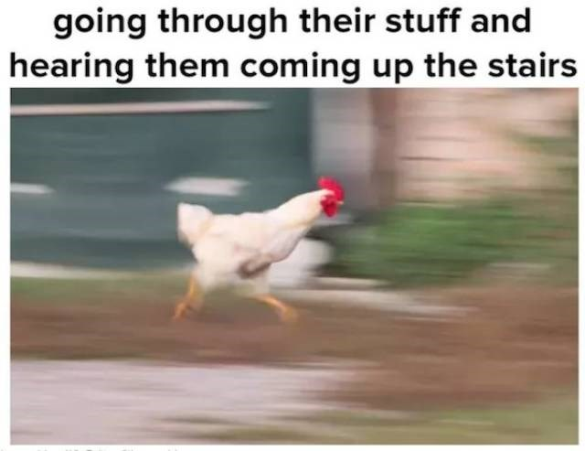 meme - Chicken - going through their stuff and hearing them coming up the stairs