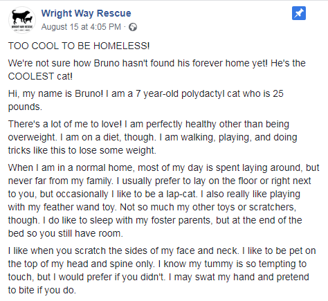 Text - Wright Way Rescue August 15 at 4:05 PM тоо COOL TO BЕ НОMELESS! We're not sure how Bruno hasn't found his forever home yet! He's the COOLEST cat! Hi, my name is Bruno! I am a 7 year-old polydactyl cat who is 25 pounds. There's a lot of me to love! I am perfectly healthy other than being overweight. I am on a diet, though. I am walking, playing, and doing tricks like this to lose some weight. When I am in a normal home, most of my day is spent laying around, but never far from my family. I
