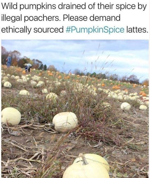 pumpkin spice meme - Adaptation - Wild pumpkins drained of their spice by illegal poachers. Please demand ethically sourced #PumpkinSpice lattes.