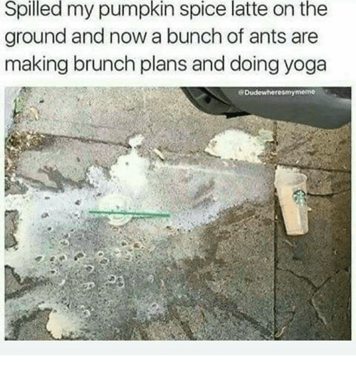 pumpkin spice meme - Text - Spilled my pumpkin spice latte on the ground and now a bunch of ants are making brunch plans and doing yoga Dudewheresmymeme
