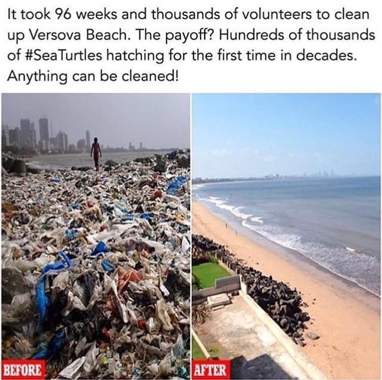 wholesome meme of a beach that was cleaned and resulted in sea turtles hatching