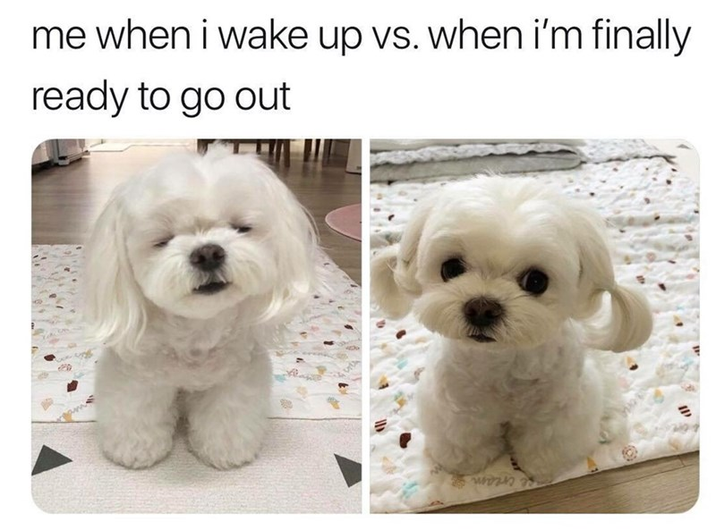 basic meme - Dog - me when i wake up vs. when i'm finally ready to go out e cream