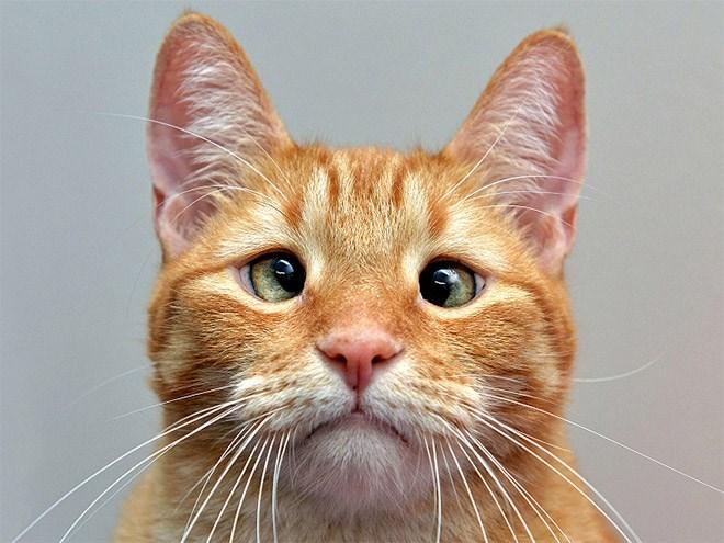 derp - Cat