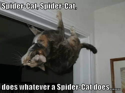 Cat - Spider-Cat, Spider-Cat, does whatever a Spider-Cat does..