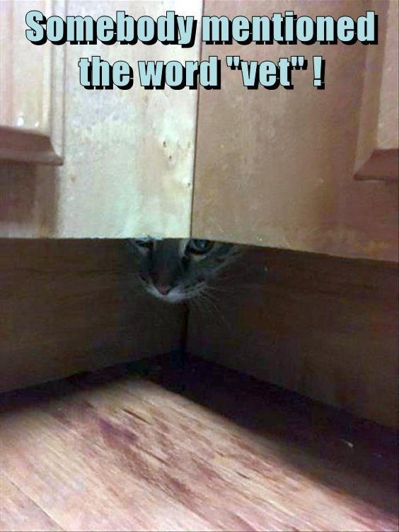 "Floor - Somebody mentioned the word ""vet"" !"