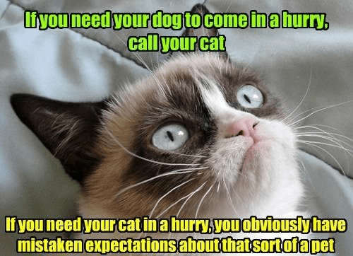 Cat - iyou need your dog to come in ahurry, call your cat Ifyou need your catinahurry.you obviouslyhave mistaken expectationsaboutthatsortofapet