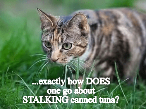 Cat - ...exactly how DOES one go about STALKING canned tuna?