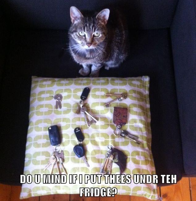 Cat - DOU MIND IFI PUT THEES UNDR TEH FRIDGE?